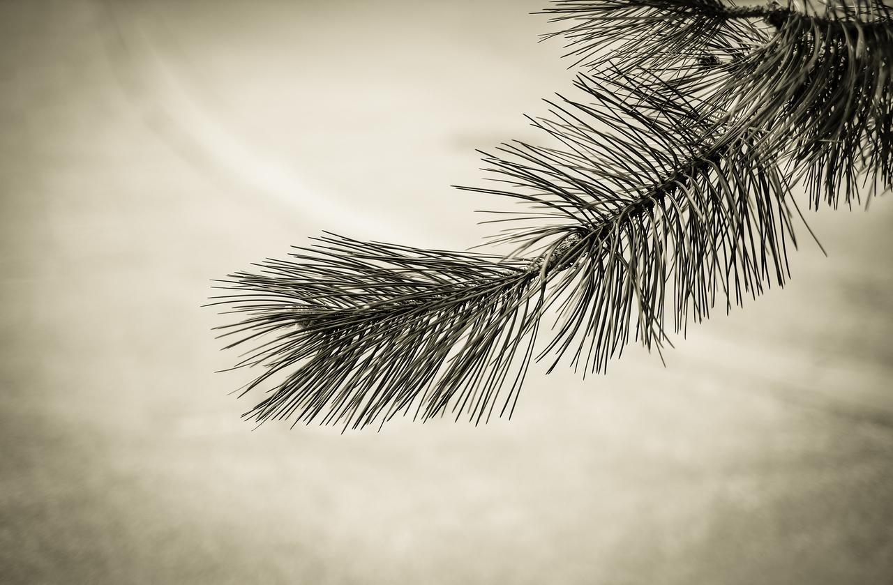 2012-03-31 - Home - 15