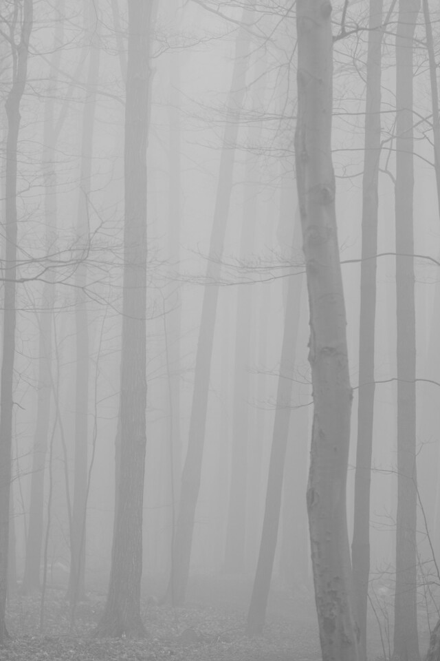 2012-03-21 - Thornhill Woods - 10
