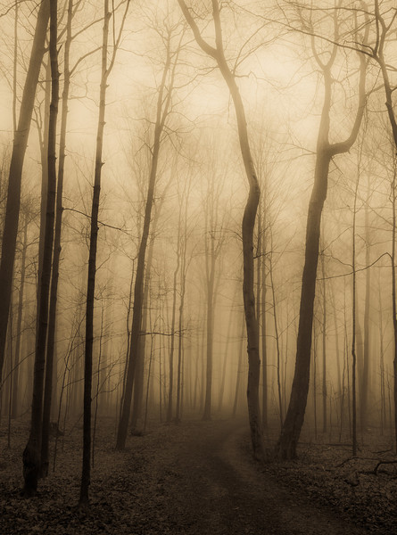 2012-03-21 - Thornhill Woods - 03a