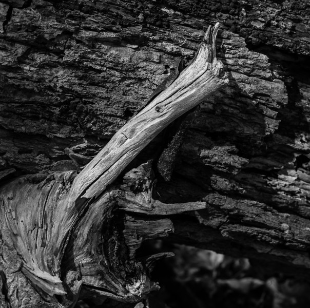 2012-03-24 - Thornhill Woods - 08