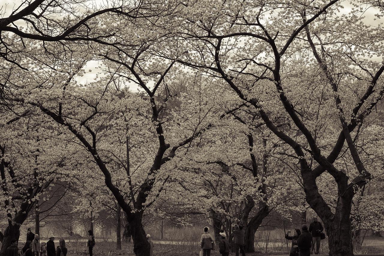 2012-04-12 - High Park - 02