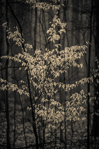 2012-03-21 - Thornhill Woods - 24