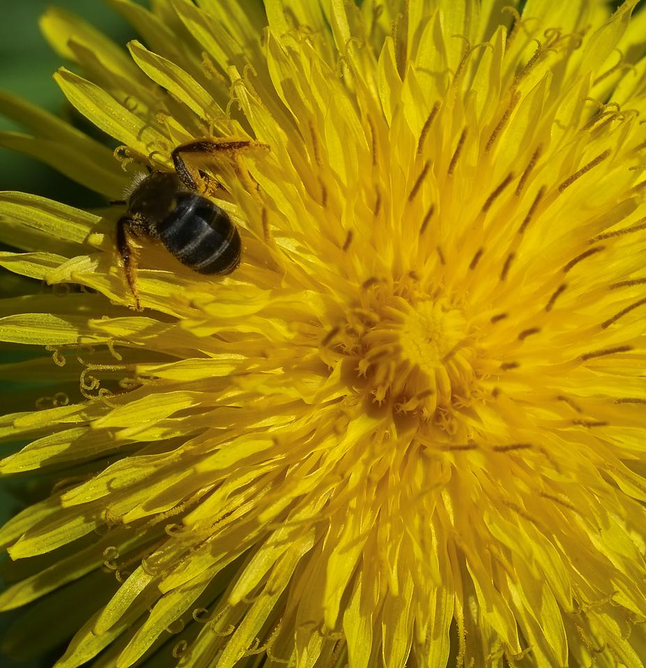 2012-05-11 - Pomona Park - 07