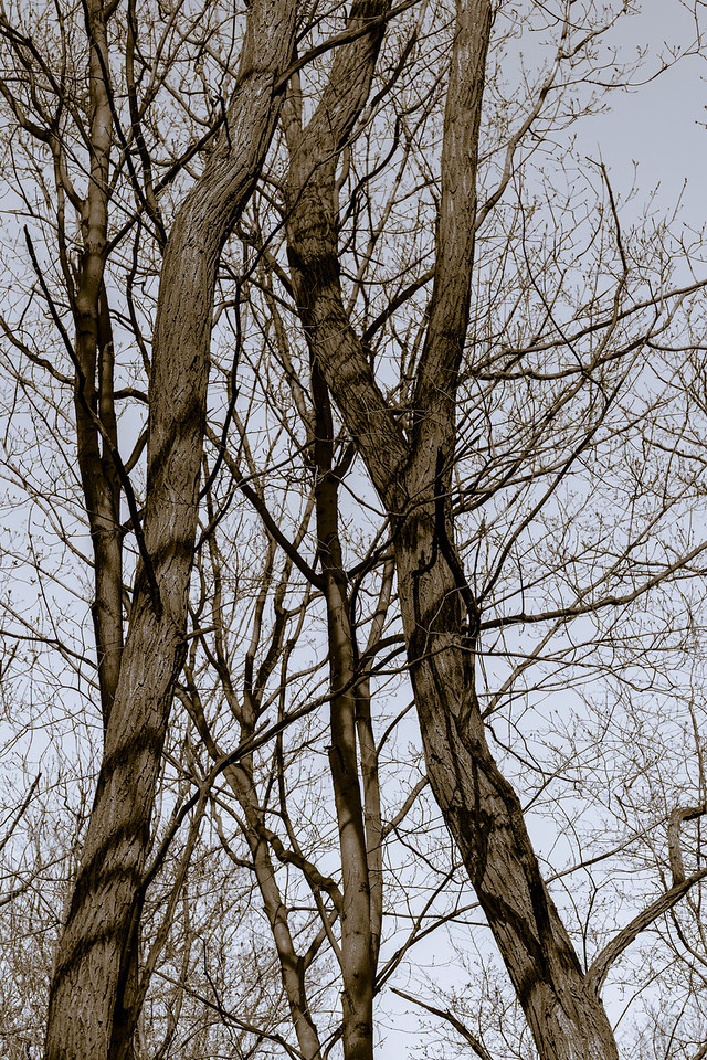 2012-03-24 - Thornhill Woods - 06
