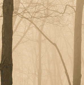 2012-03-21 - Thornhill Woods - 04