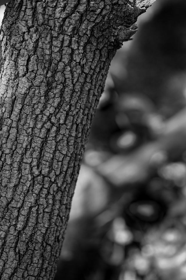 2012-05-11 - Pomona Park - 02