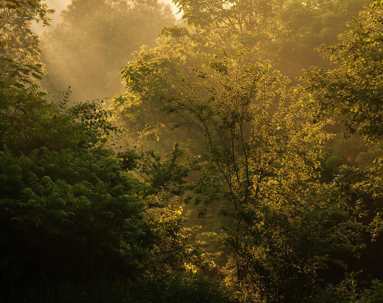 2012-06-10 - Wilket Creek Park - 06