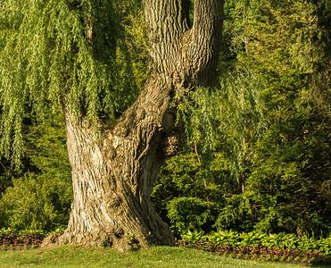 2012-06-25 - Edward Gardens - 34