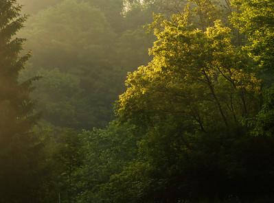 2012-06-10 - Wilket Creek Park - 09