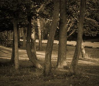 2012-06-10 - Wilket Creek Park - 03