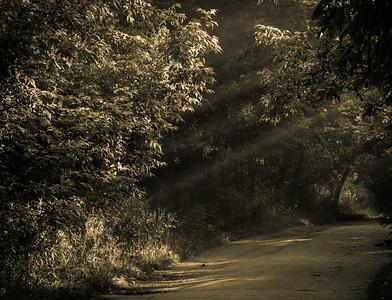 2012-06-10 - Wilket Creek Park - 11