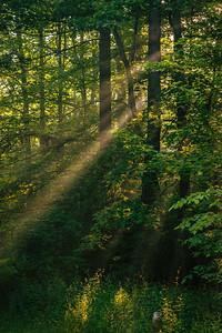 2012-06-10 - Wilket Creek Park - 13