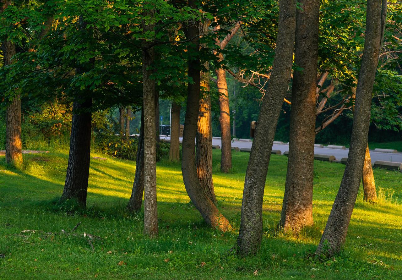2012-06-10 - Wilket Creek Park - 02