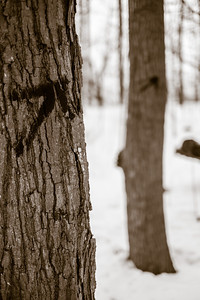 2013-03-06_Thornhill_Woods_18
