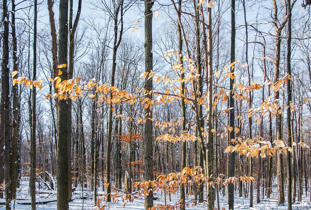 2012-12-30_Thornhill_Woods_Park_24
