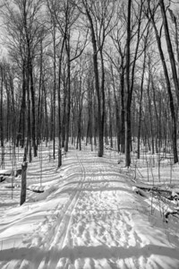 2012-12-30_Thornhill_Woods_Park_30