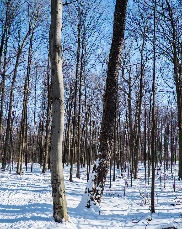 2012-12-30_Thornhill_Woods_Park_05