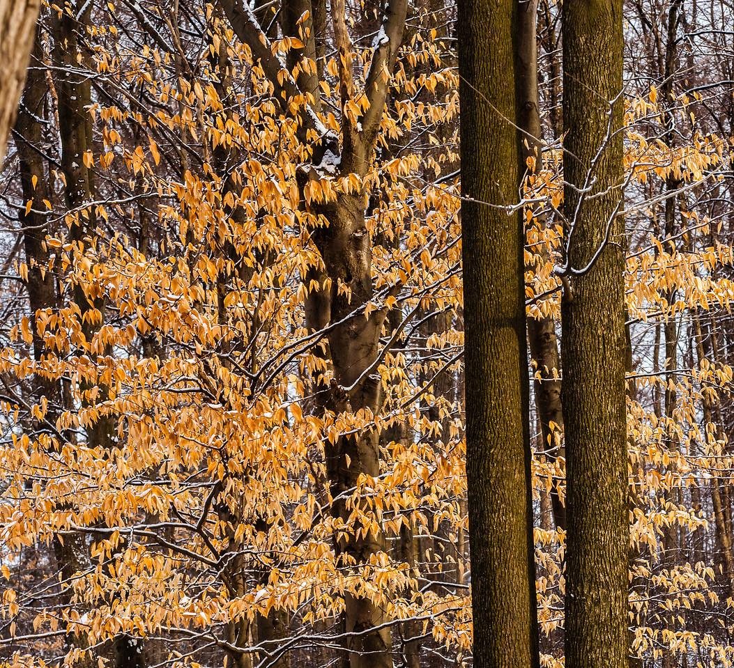 2013-02-24_Humber_Arboretum_22