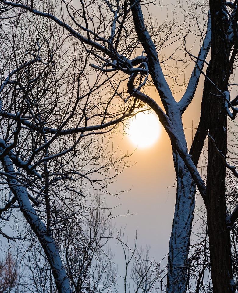 2013-02-24_Humber_Arboretum_14