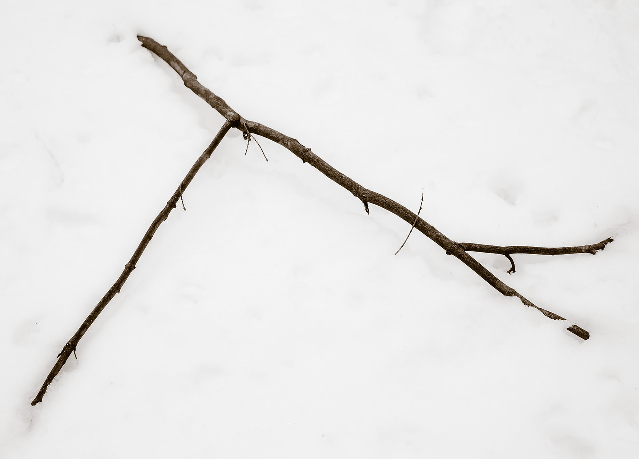 2013-03-06_Thornhill_Woods_04