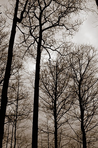 2013-03-06_Thornhill_Woods_15