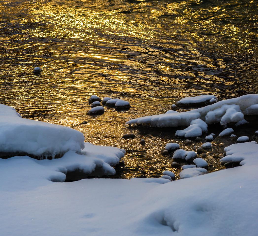2013-02-24_Humber_Arboretum_21