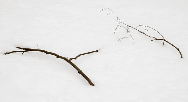 2013-03-06_Thornhill_Woods_02