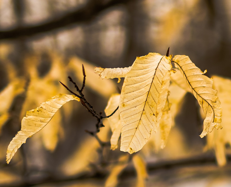 2013-03-06_Thornhill_Woods_19