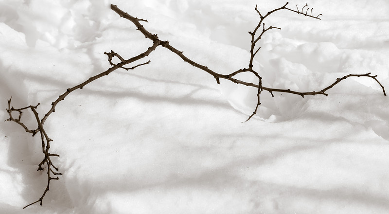 2013-02-13_Pomona_Park_03