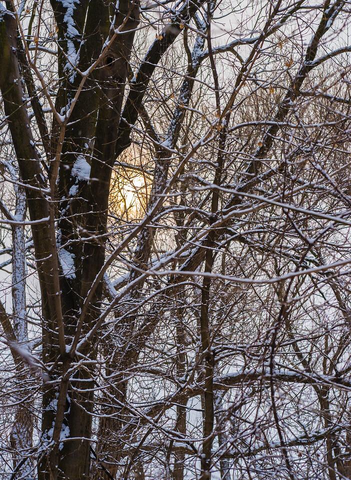 2013-02-24_Humber_Arboretum_13