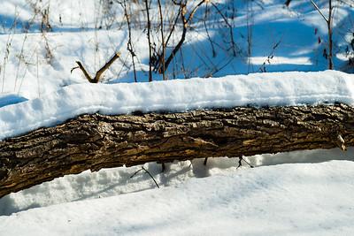 2013-02-13_Pomona_Park_15