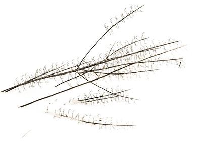 2012-12-27_Sagecrest_Pond_01