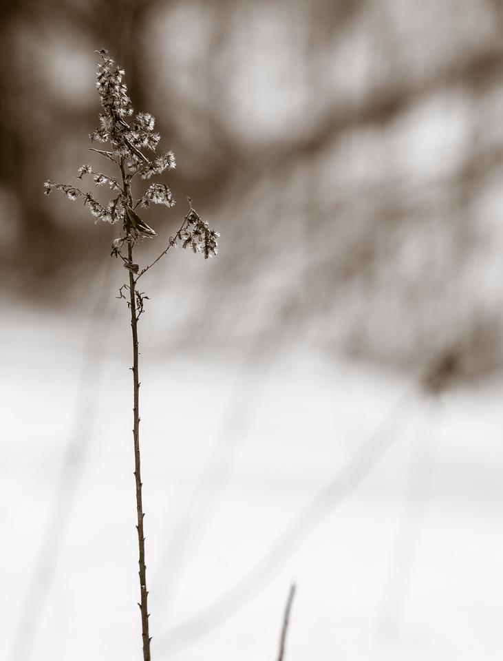 2013-02-13_Pomona_Park_02