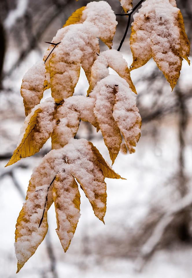 2013-02-24_Humber_Arboretum_06