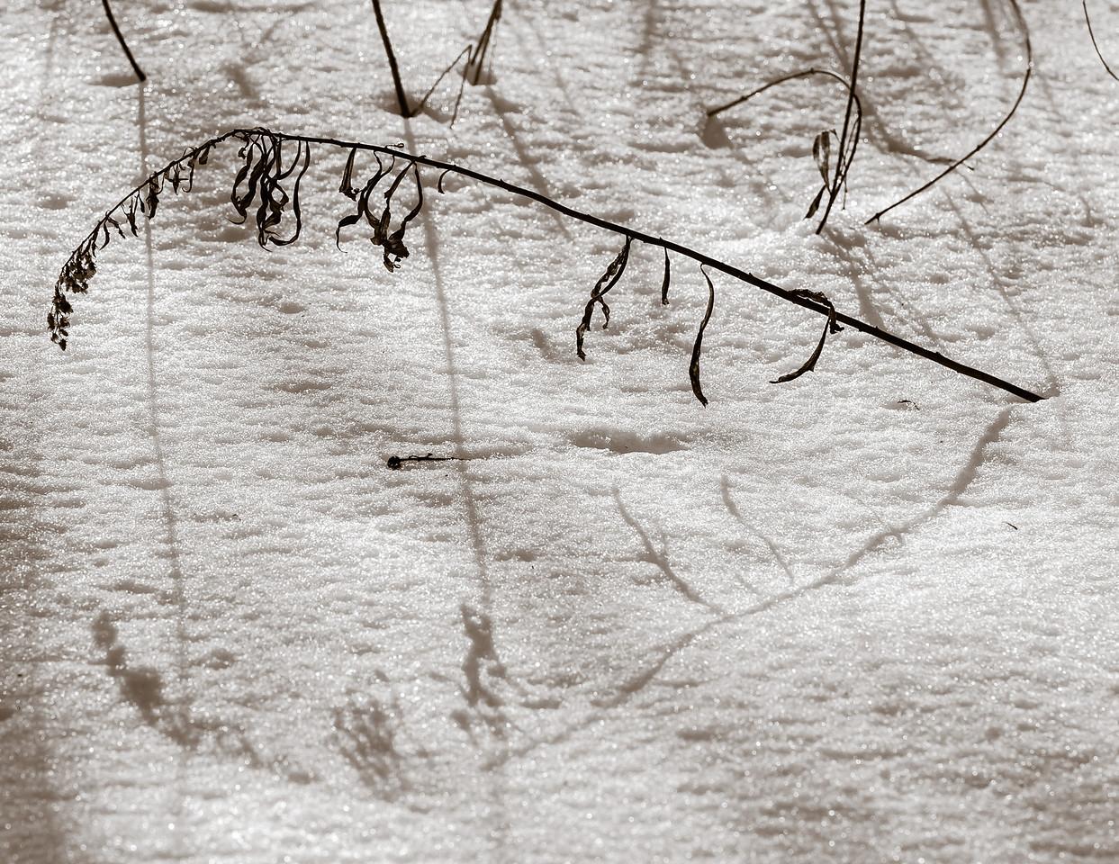 2013-02-13_Pomona_Park_11