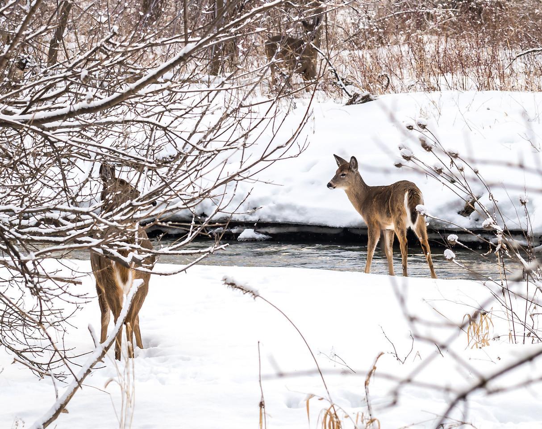 2013-02-24_Humber_Arboretum_16