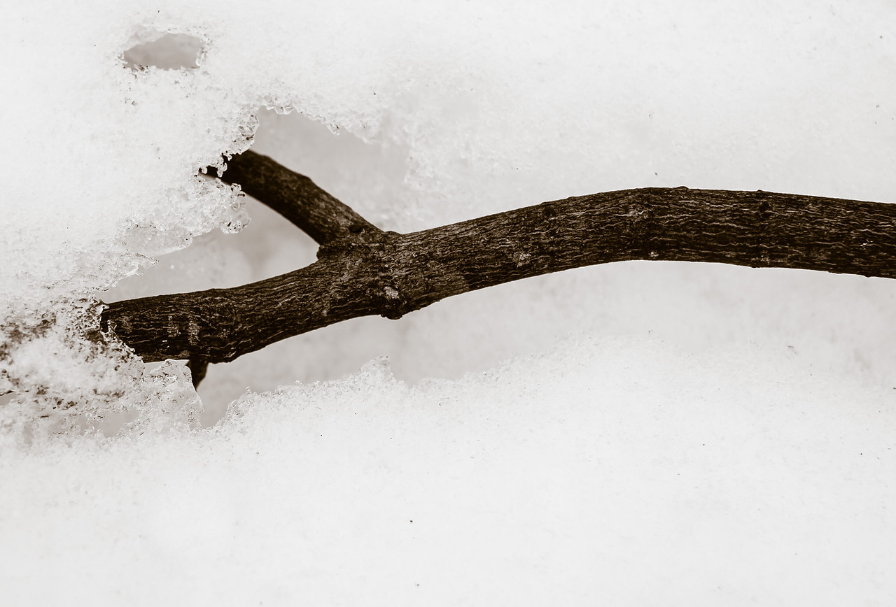 2013-03-06_Thornhill_Woods_03