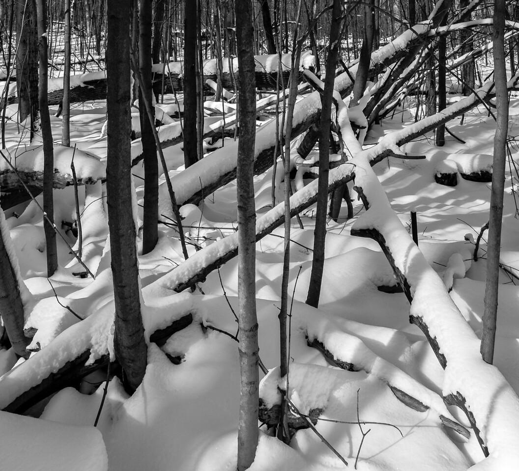 2012-12-30_Thornhill_Woods_Park_20