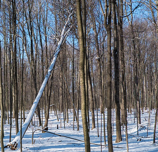 2012-12-30_Thornhill_Woods_Park_31