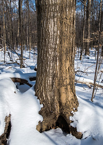 2012-12-30_Thornhill_Woods_Park_09