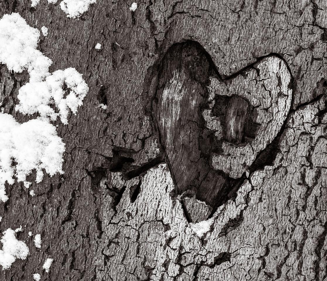 2013-02-24_Humber_Arboretum_05