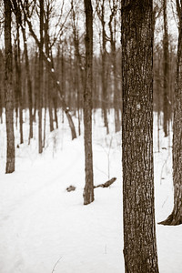 2013-03-06_Thornhill_Woods_21