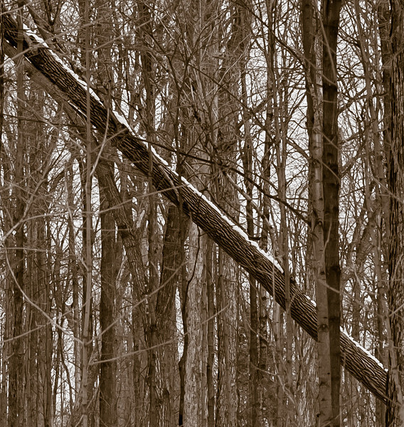2013-03-06_Thornhill_Woods_22