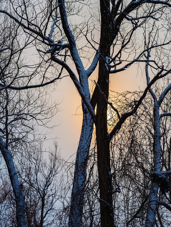 2013-02-24_Humber_Arboretum_15