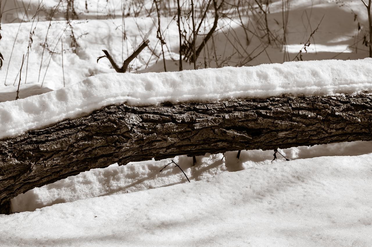 2013-02-13_Pomona_Park_14