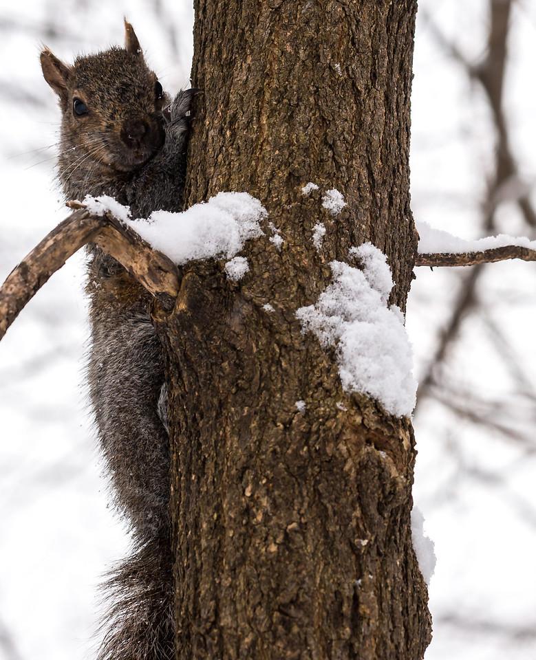 2013-02-24_Humber_Arboretum_11