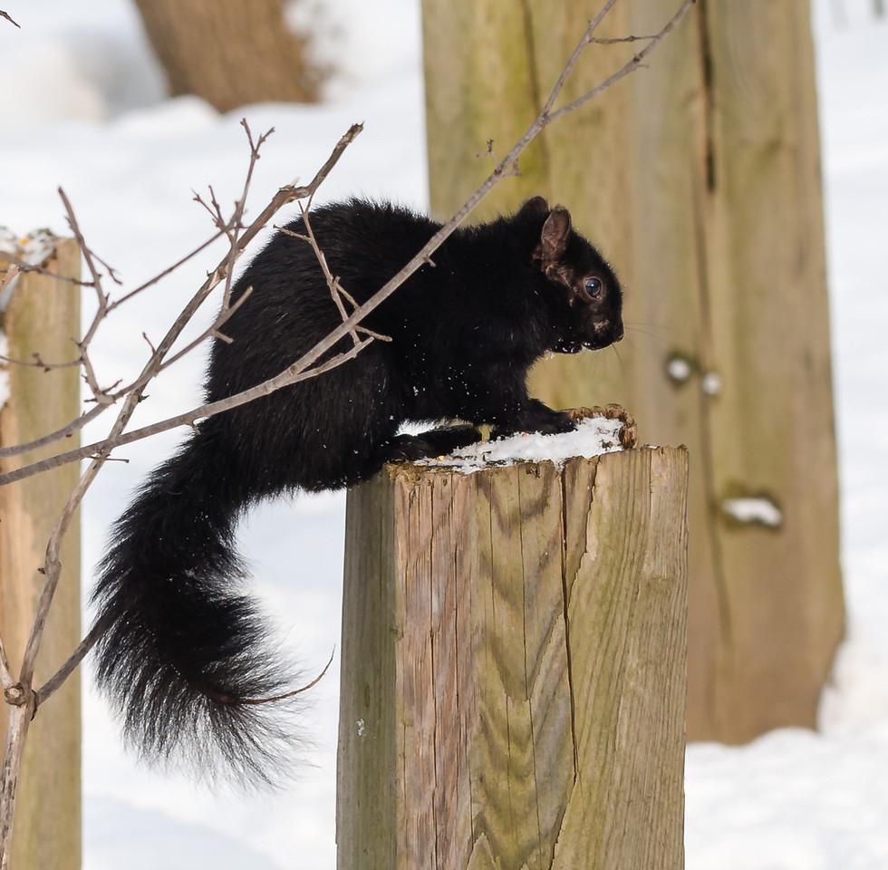 2013-02-24_Humber_Arboretum_26