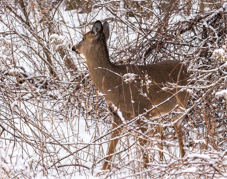 2013-02-24_Humber_Arboretum_08