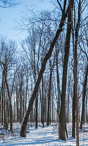 2012-12-30_Thornhill_Woods_Park_07