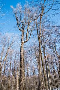 2012-12-30_Thornhill_Woods_Park_08